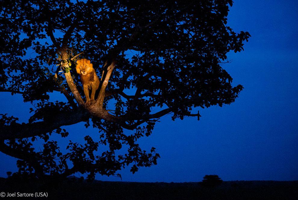 Veolia Environnement Wildlife Photographer 35 Победители Конкурса фотографий дикой природы 2012