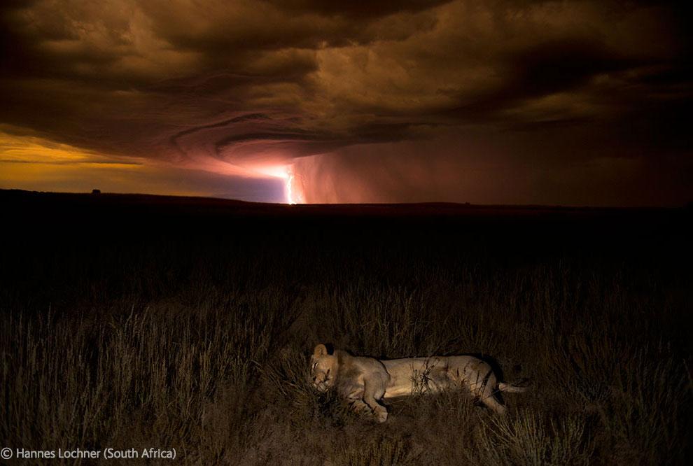 Veolia Environnement Wildlife Photographer 38 Победители Конкурса фотографий дикой природы 2012