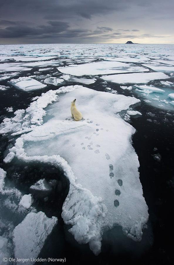 Veolia Environnement Wildlife Photographer 39 Победители Конкурса фотографий дикой природы 2012