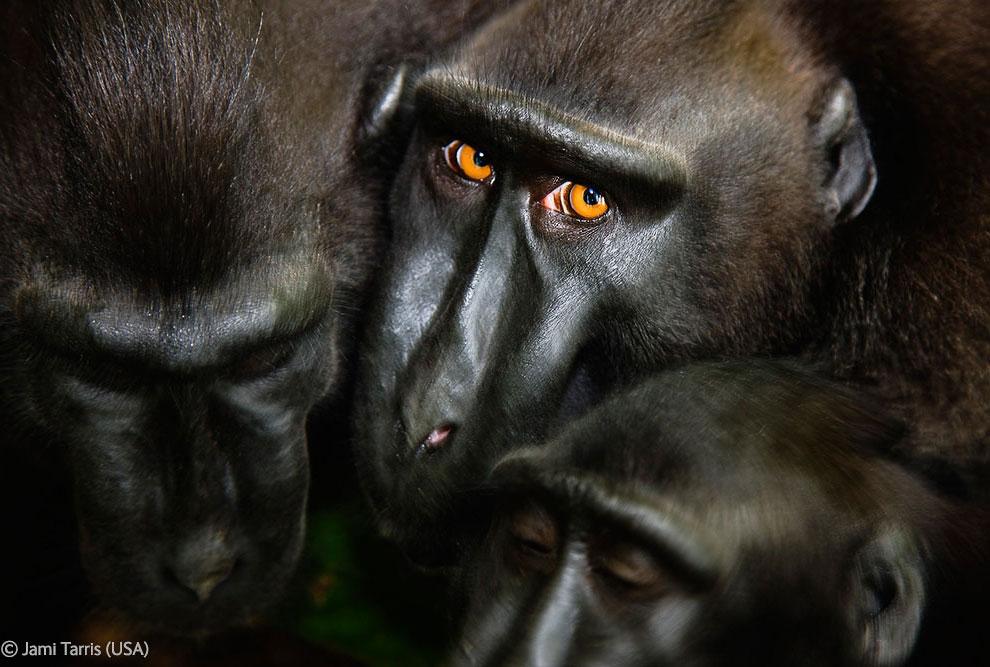 Veolia Environnement Wildlife Photographer 40 Победители Конкурса фотографий дикой природы 2012