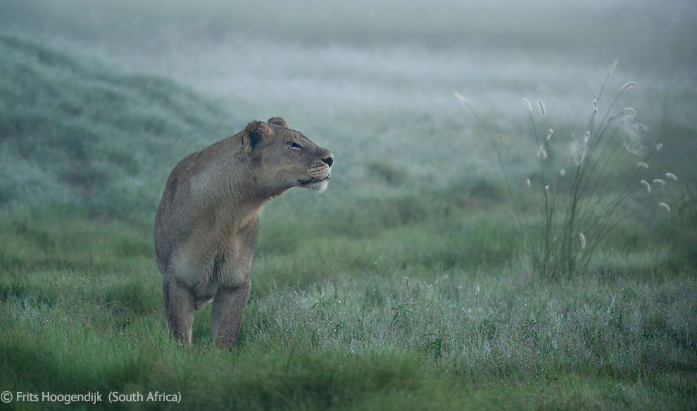 Veolia Environnement Wildlife Photographer 41 Победители Конкурса фотографий дикой природы 2012