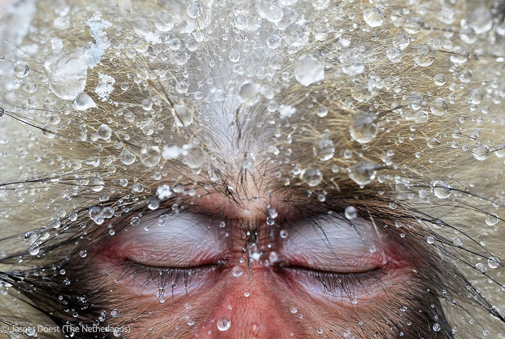 Veolia Environnement Wildlife Photographer 42 Победители Конкурса фотографий дикой природы 2012