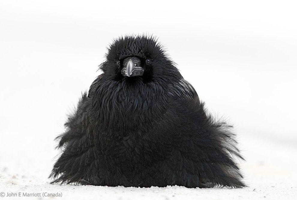 Veolia Environnement Wildlife Photographer 43 Победители Конкурса фотографий дикой природы 2012