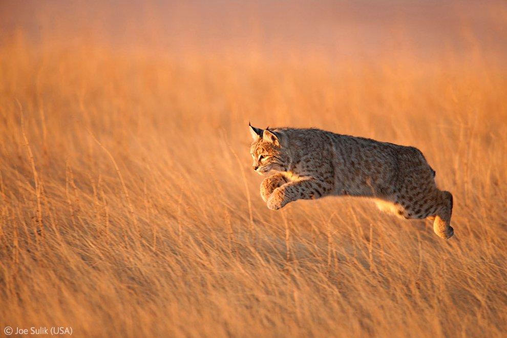 Veolia Environnement Wildlife Photographer 7 Победители Конкурса фотографий дикой природы 2012