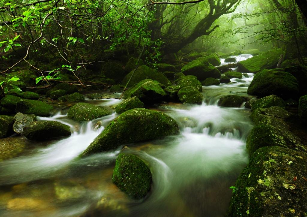 Yakusima 1 Леса на острове Якусима