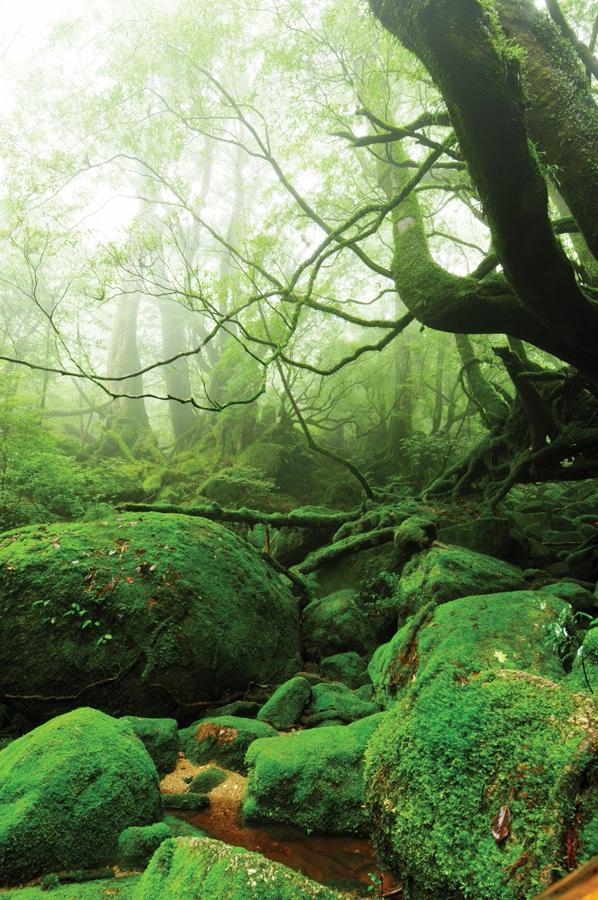 Yakusima 10 Леса на острове Якусима