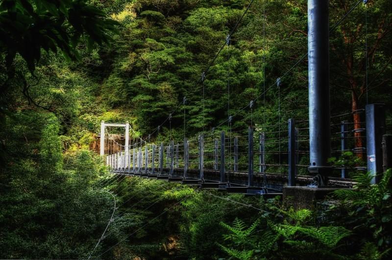 Леса на острове Якусима