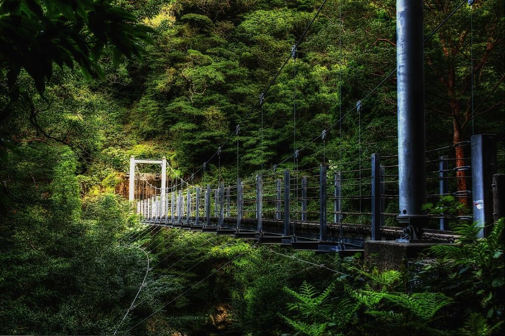 Yakusima 2 Леса на острове Якусима