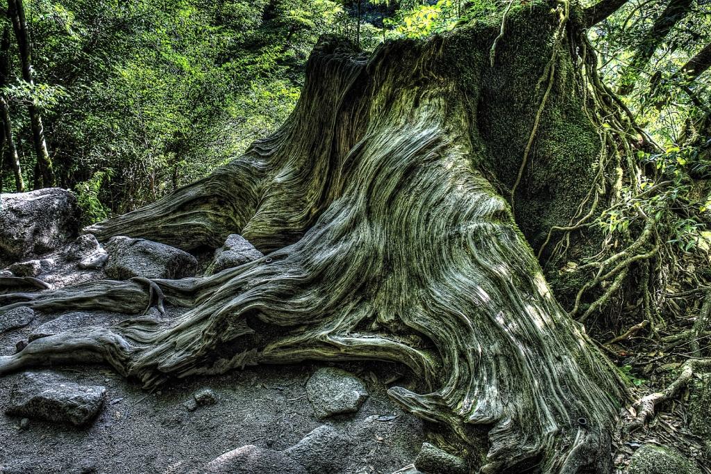 Yakusima 3 Леса на острове Якусима