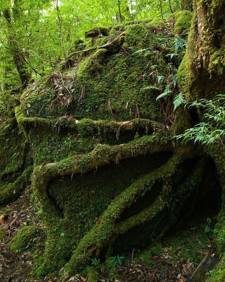 Yakusima 4 Леса на острове Якусима