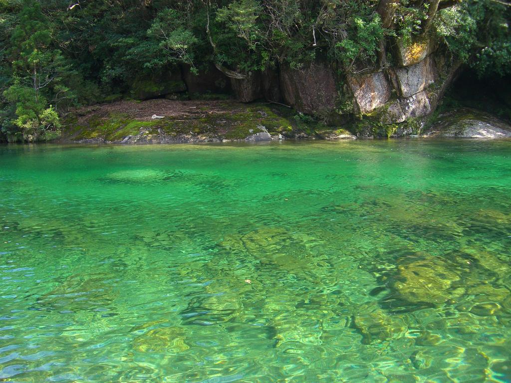 Yakusima 5 Леса на острове Якусима