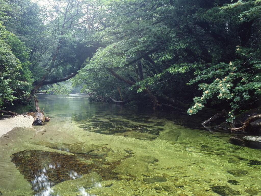 Yakusima 6 Леса на острове Якусима