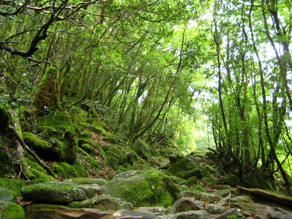 Yakusima 8 Леса на острове Якусима
