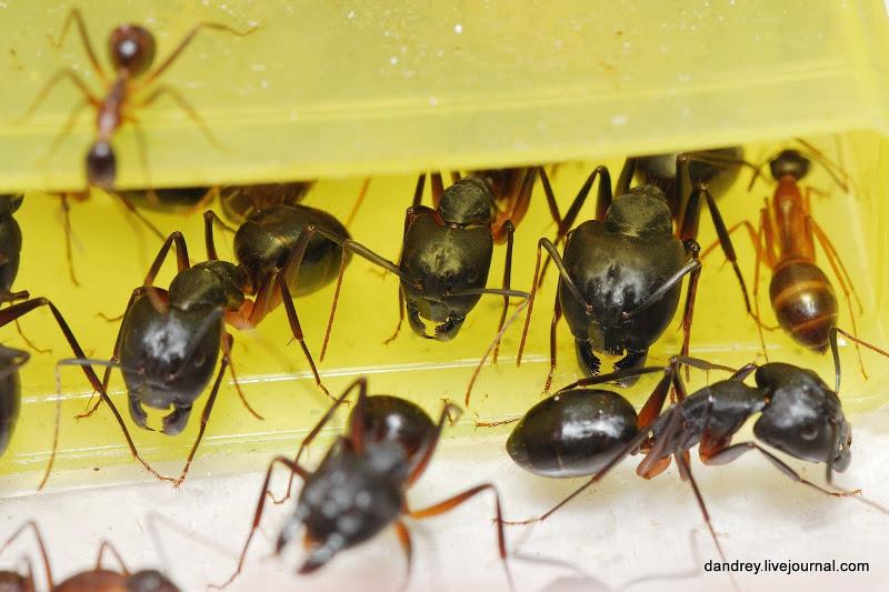 Как я строил муравейник —2