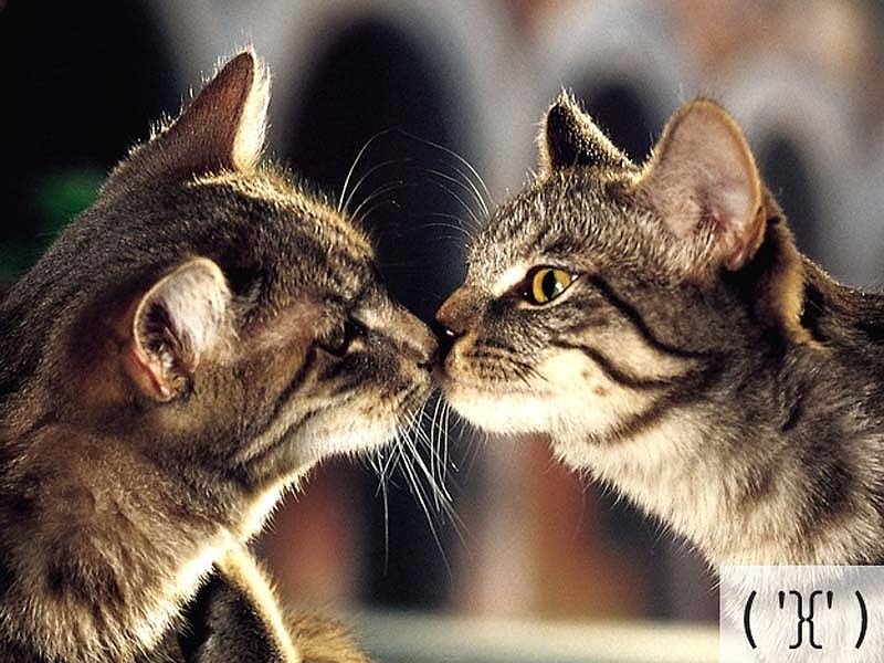 catsmiles 13 Кошачьи смайлики