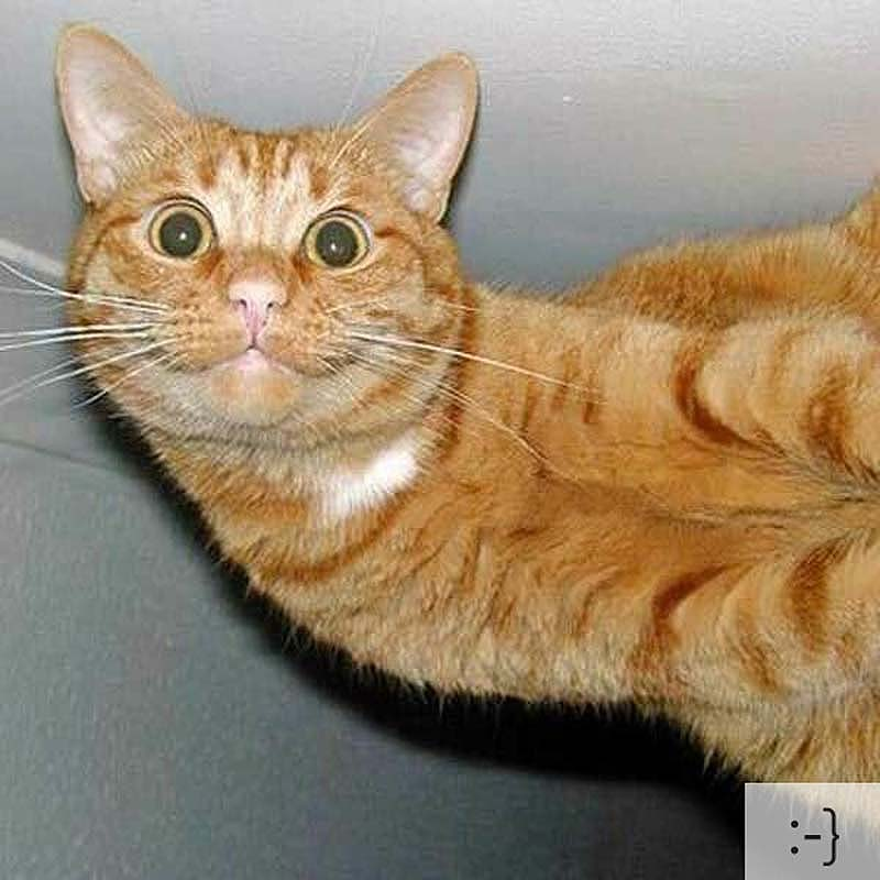 catsmiles 17 Кошачьи смайлики