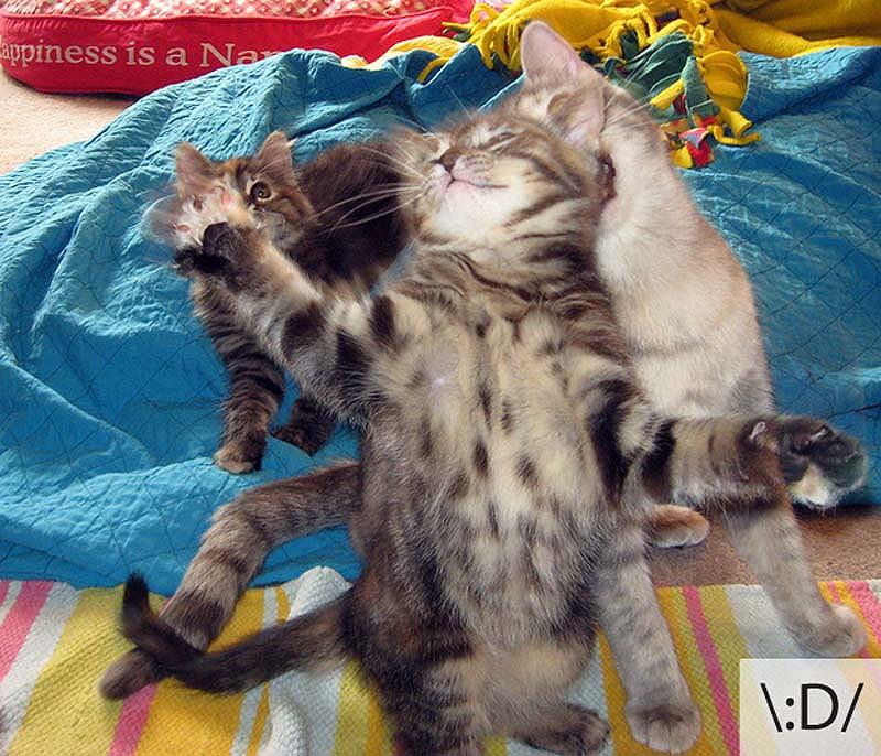 catsmiles 23 Кошачьи смайлики