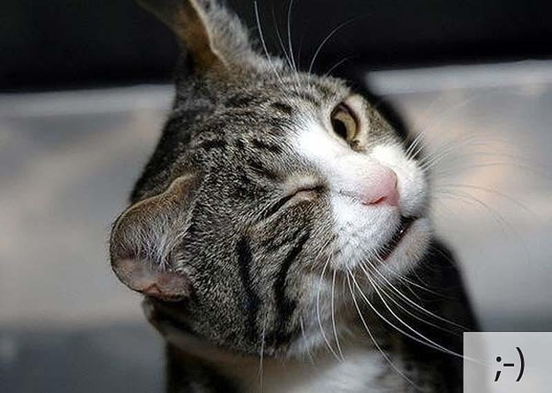 catsmiles 3 Кошачьи смайлики