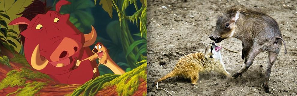 disneyanimals 15 Диснеевские животные в реальной жизни