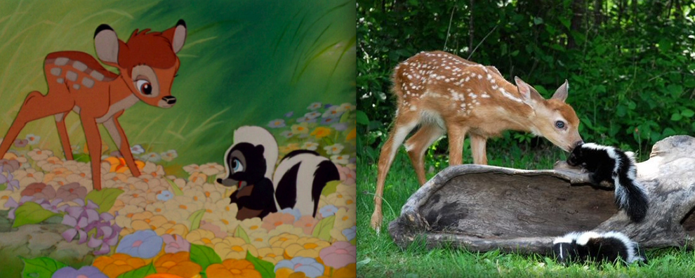 disneyanimals 2 Диснеевские животные в реальной жизни