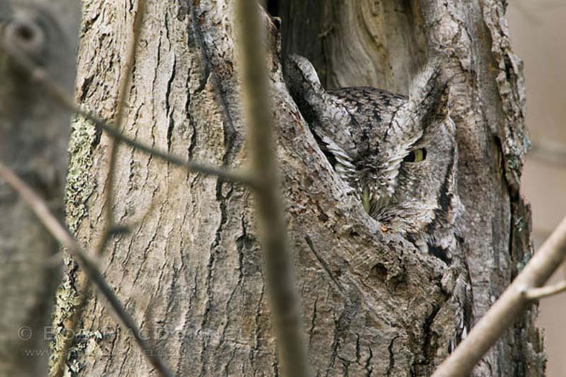 Зверюшки со всего мира - Страница 6 Owl-10