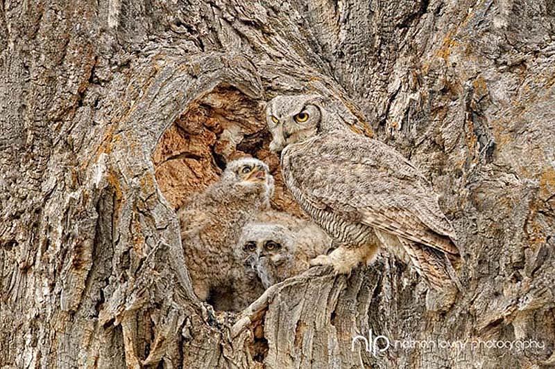 owl 12 Совы   мастера камуфляжа