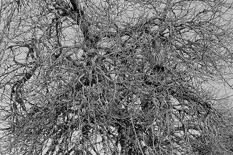owl 15 Совы   мастера камуфляжа