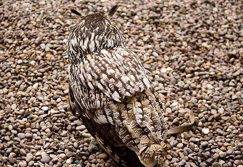 Зверюшки со всего мира - Страница 6 Owl-3