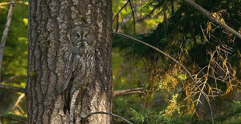 Зверюшки со всего мира - Страница 6 Owl-4