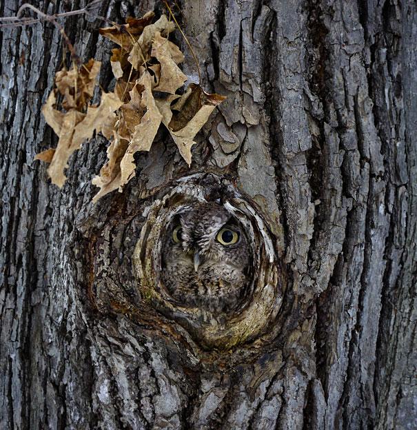 owl 6 Совы   мастера камуфляжа
