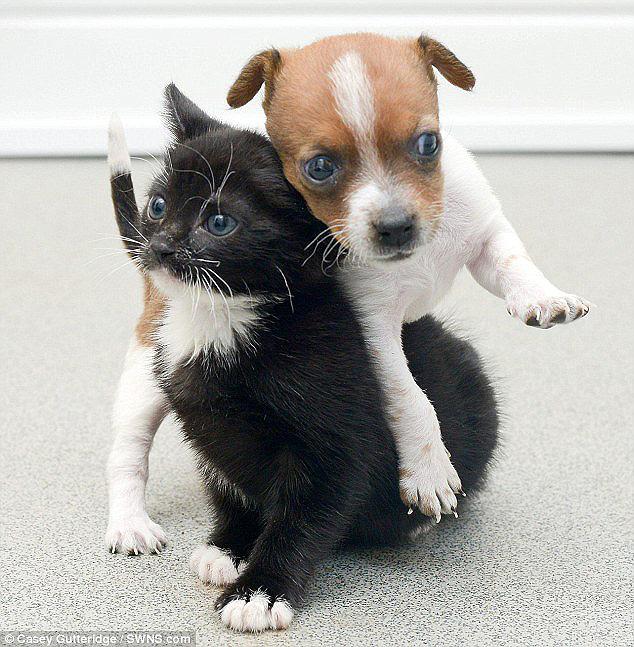 идеальным картинки с котятами смешные и милые и щенками отличительные особенности совпадают