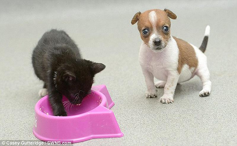 картинки маленькие собачки котята опытных дайверов аквариуме