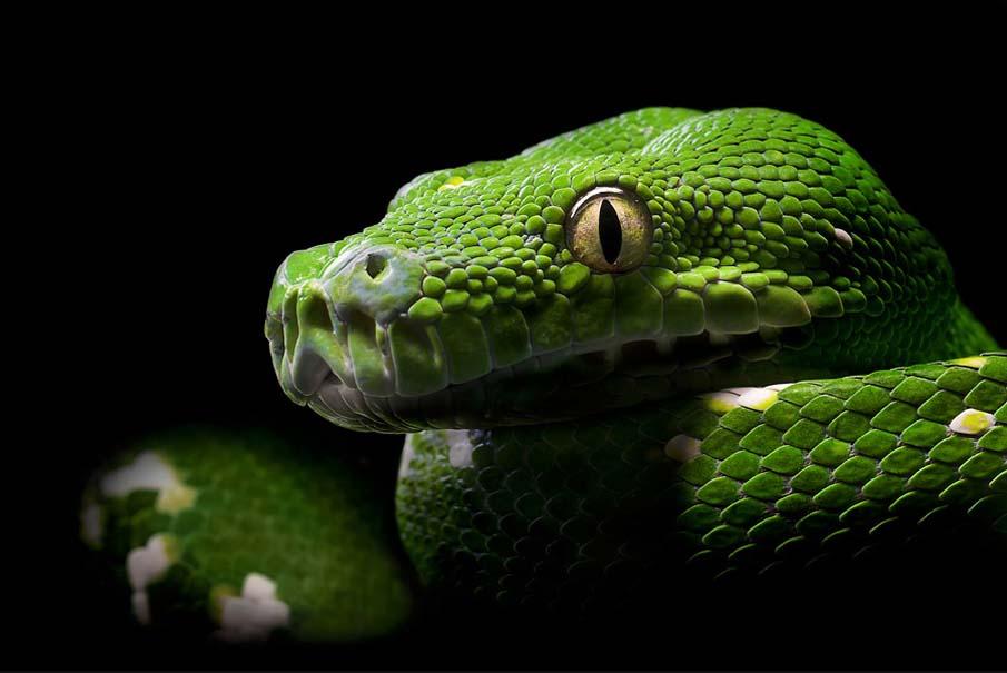 snakes 1 50 восхитительных змей