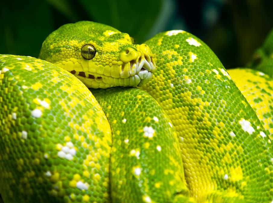 50 восхитительных змей