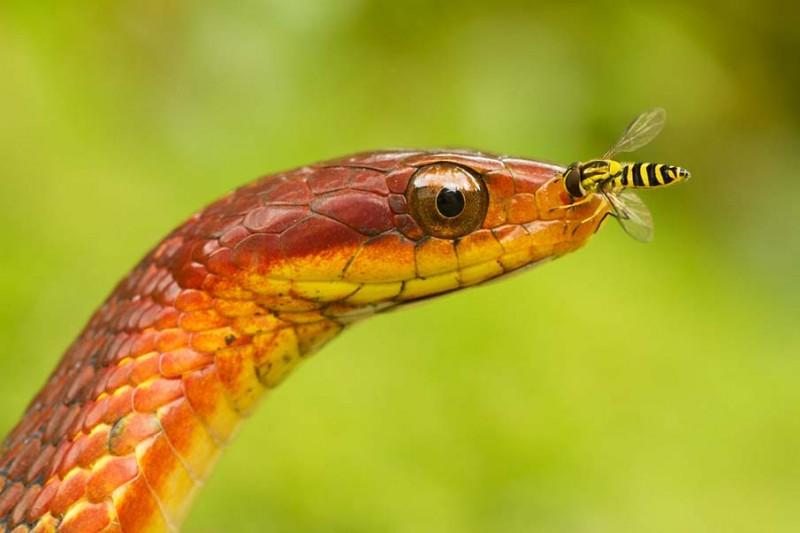 snakes 29 800x533 50 восхитительных змей