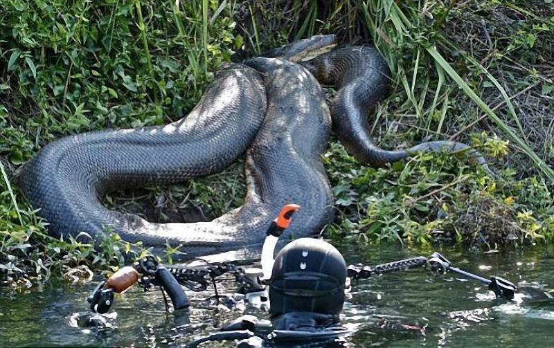 017 Дайвер сделал потрясающие фото анаконды под водой