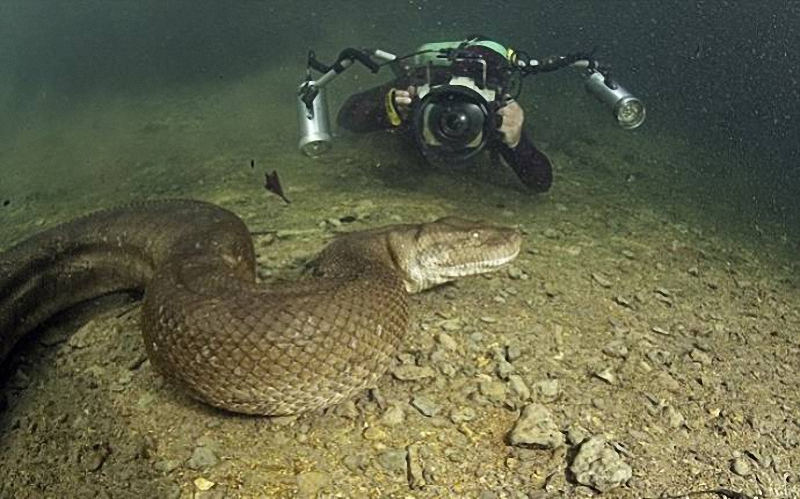025 Дайвер сделал потрясающие фото анаконды под водой