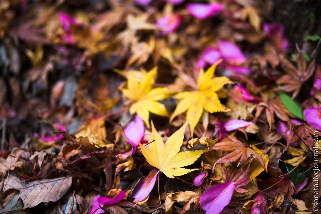 1214 Клёны в ботаническом саду Кобе