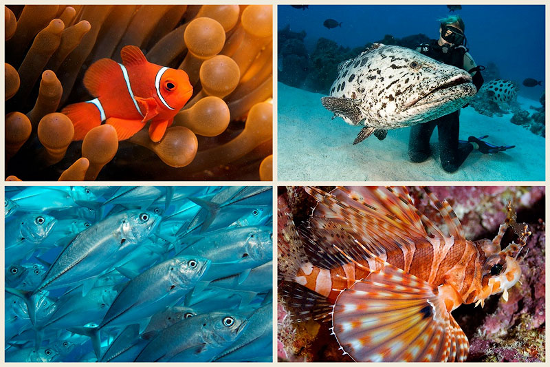 BIGPIC32 Исчезающие красоты Большого Барьерного рифа