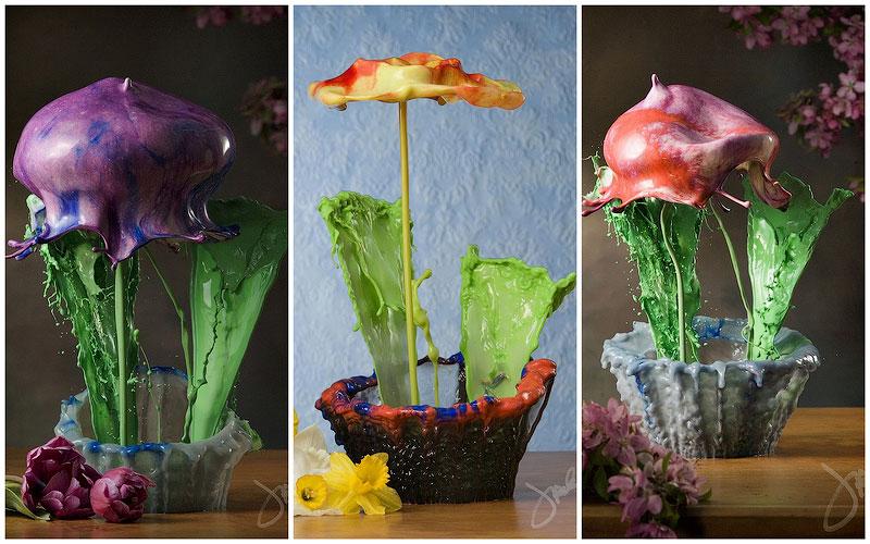 Жидкие комнатные цветы