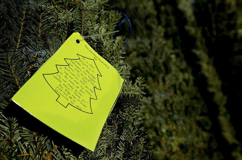 BIGPIC41 Как готовят рождественские елки в Америке