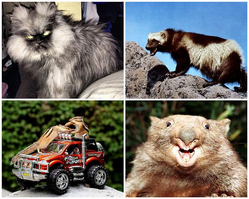 Bigpic47 животные которым не страшен