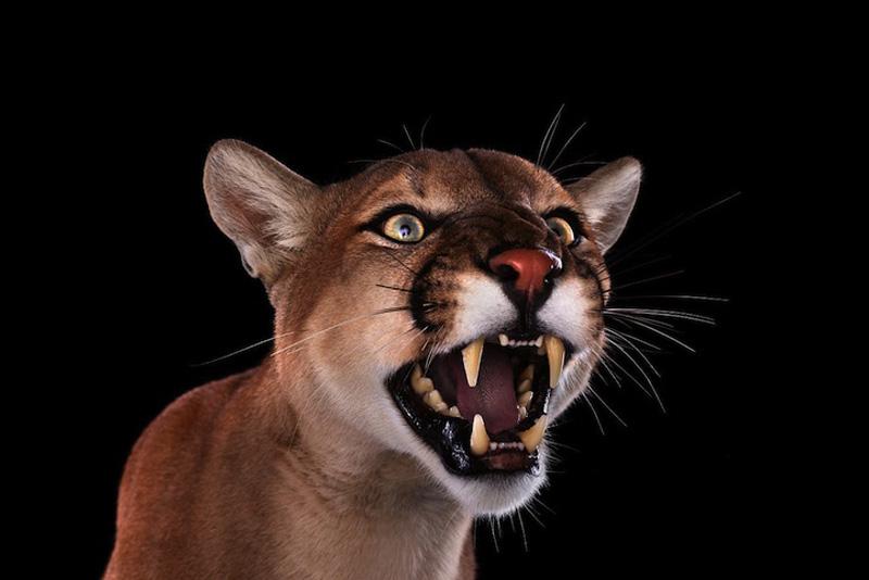Portraits of Wild Animals 1 Портреты животных крупным планом