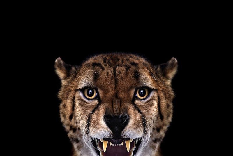 Portraits of Wild Animals 3 Портреты животных крупным планом