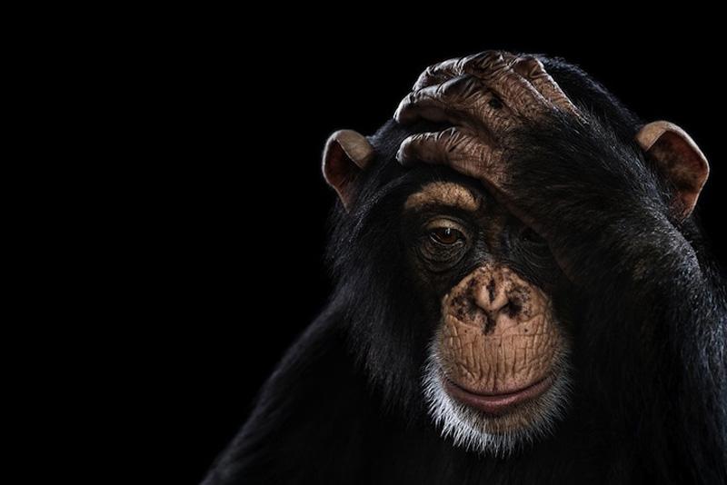 Portraits of Wild Animals 4 Портреты животных крупным планом