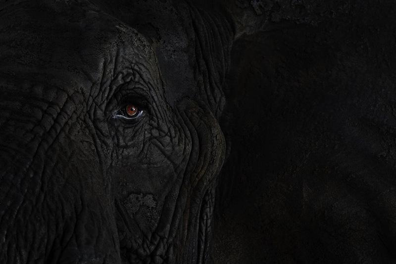 Portraits of Wild Animals 5 Портреты животных крупным планом