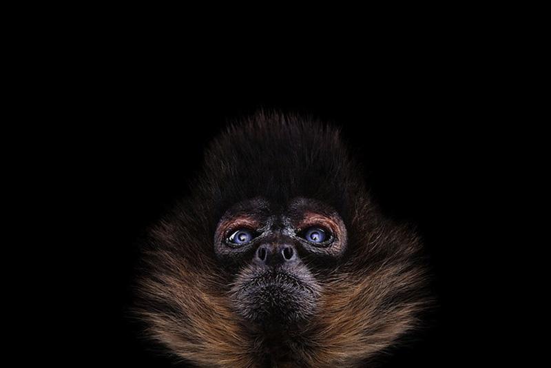 Portraits of Wild Animals 8 Портреты животных крупным планом