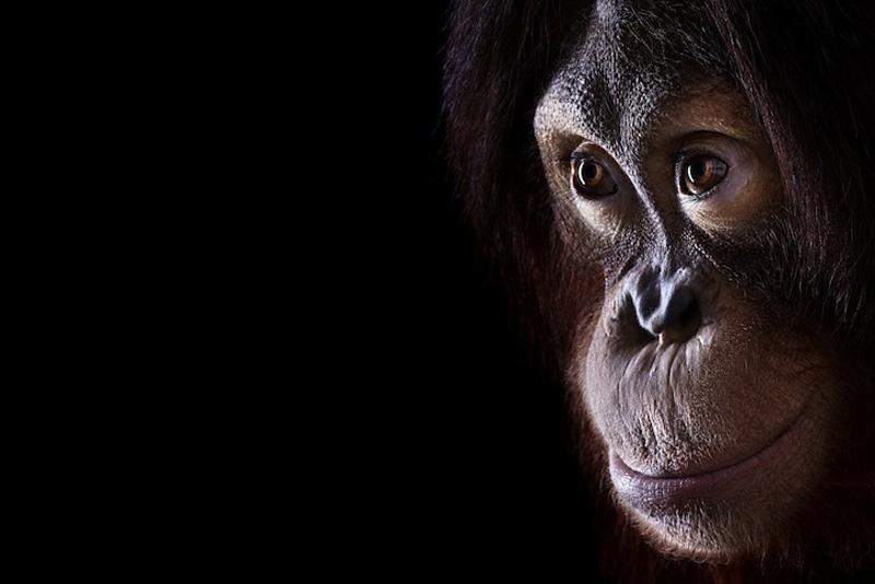 Portraits of Wild Animals 9 Портреты животных крупным планом