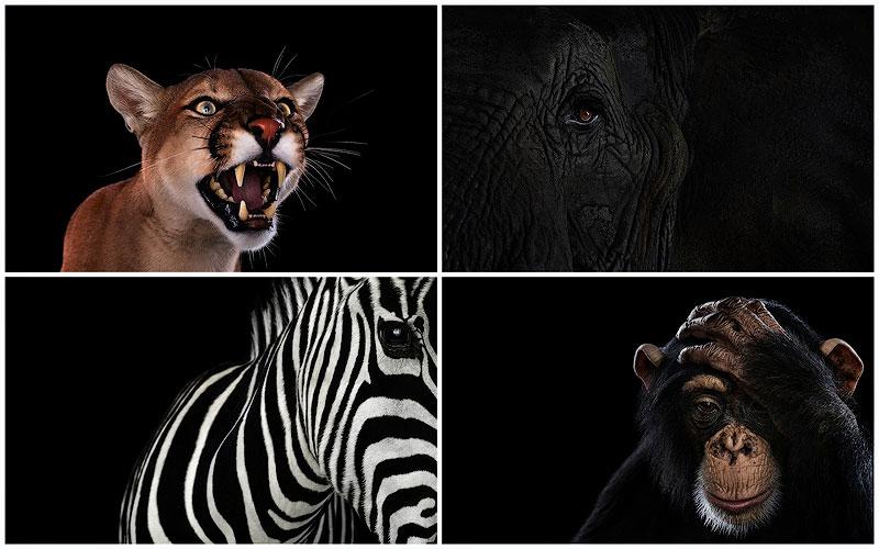 TEMP14 Портреты животных крупным планом