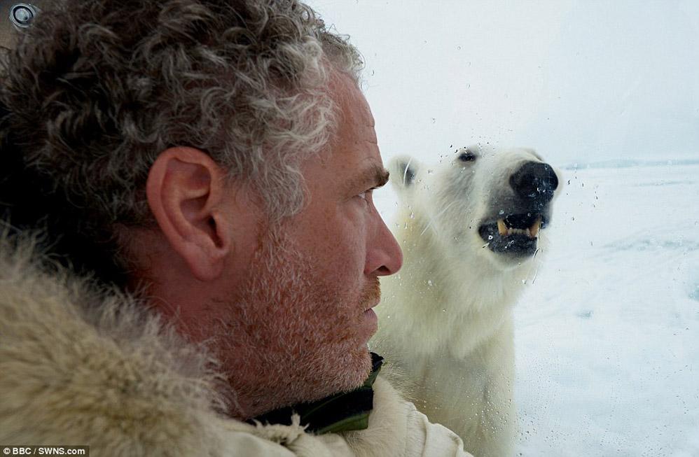 Леденящие душу кадры — белый медведь пытается сожрать человека